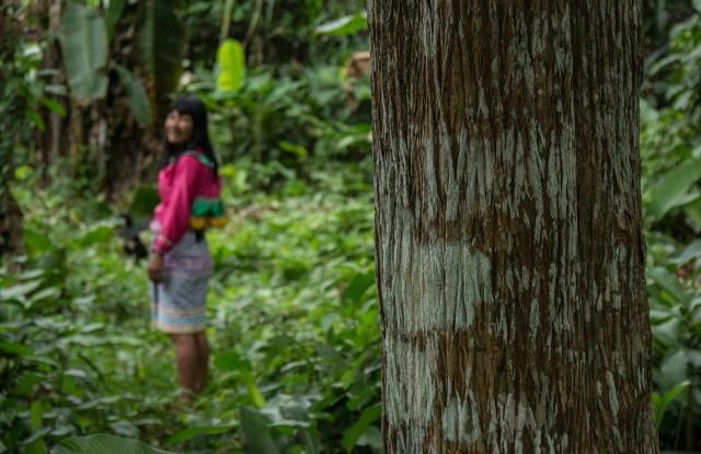 Para muchas comunidades, garantizar sus derechos sobre la tierra es tan solo parte de un proceso más amplio. Fotografía: CIFOR.