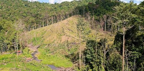 Sudah setahun umur ikrar nol deforestasi. Tapi belum rencana disusun bagaimana mencapai tujuan. Moses Ceaser/CIFOR