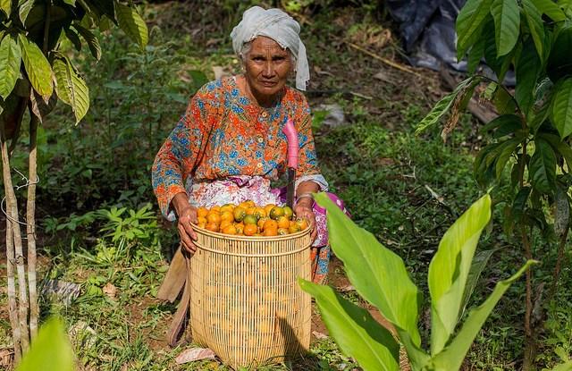 Les migrations changent la composition démographique des villages. Tri Saputro/CIFOR
