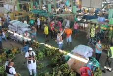 Colombia's bushmeat black market comes to light