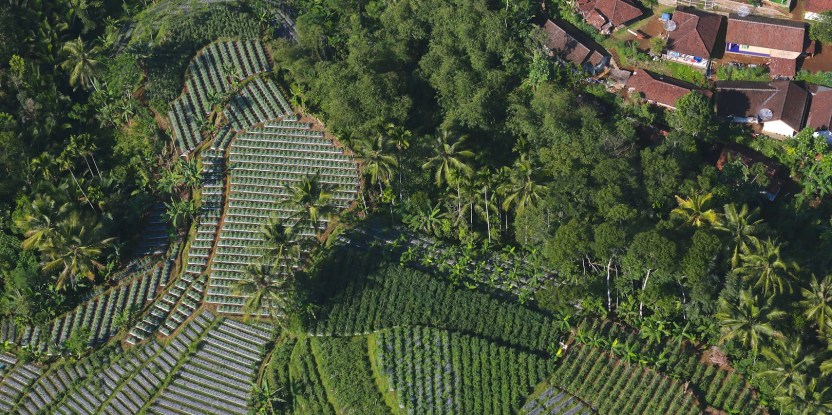 An international study is investigating the benefits and risks of agrarian change in diverse landscapes. Kate Evans / CIFOR