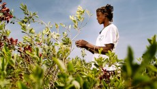 Food and a future: How restored forests help women in Burkina Faso