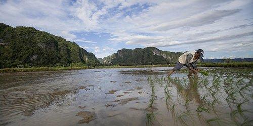 Petani di Pangkep, Sulawesi Selatan. Ada kebutuhan untuk melihat bukan hanya hutan, melainkan bentang alam yang lebih luas untuk pengurangan emisi.