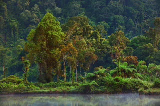 Indonesia: Biofuels from palm oil and power from tree plantations?