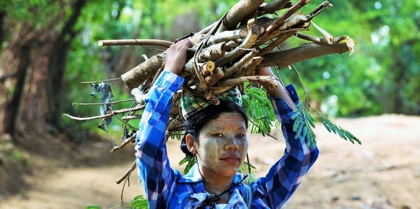 ¿Es realmente el uso de combustible de leña una de las grandes causas de la deforestación? Estudio brinda evidencias.