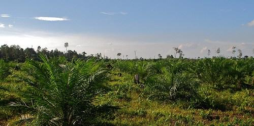 Untuk menjamin kontribusi minyak sawit pada kebijakan energi nasional, pemerintah mengupayakan target dari serapan biodiesel.