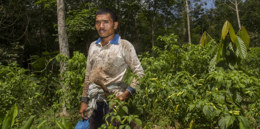 An agroforestry farmer, Haris, poses for a photograph at his farm  in the forest near Lubuk Beringin village, Bungo district, Jambi province, Indonesia.