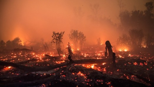 COP22 Special: Why should we care about peat?