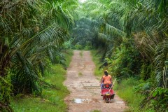 The long and winding road to sustainable palm oil
