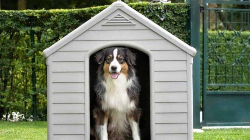 Elige la mejor casa para tu perro