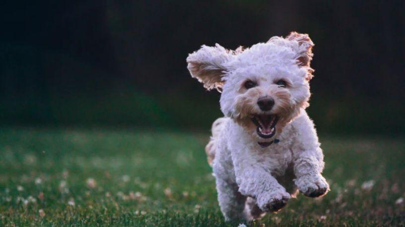 Enseña a tu perro a usar un tapete entrenador