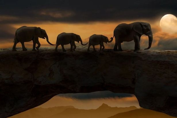 manada de elefantes cruzando un puente al atardecer - Claro Shop