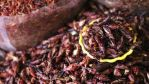 7 razones para comer chapulines