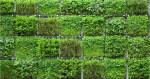 ¡Anímate a tener un jardín vertical en casa! Aquí más de 6 beneficios