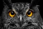 5 curiosidades fascinantes sobre los búhos que no te imaginabas