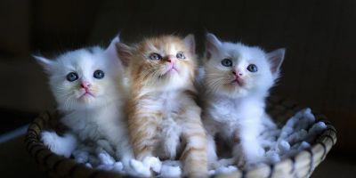 13 datos curiosos sobre los gatos