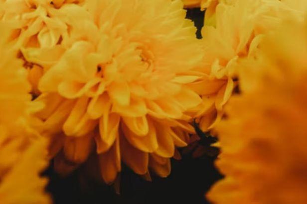 flor de cempasúchil - Claro Shop