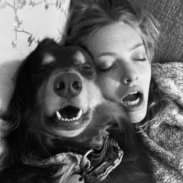 dog_amanda