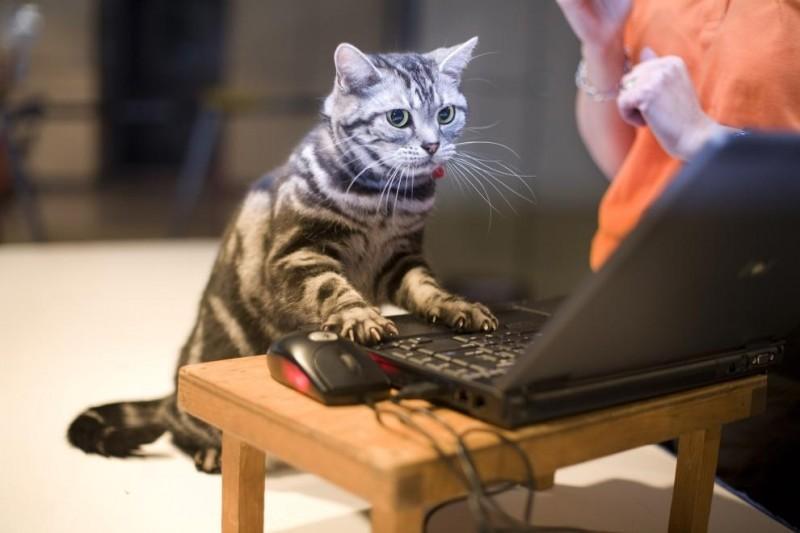 ecco uno dei nostri mici programmatori al lavoro sul forum