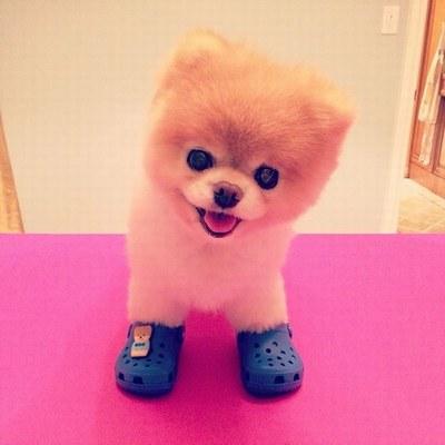 Boo-le-chien-160913_L