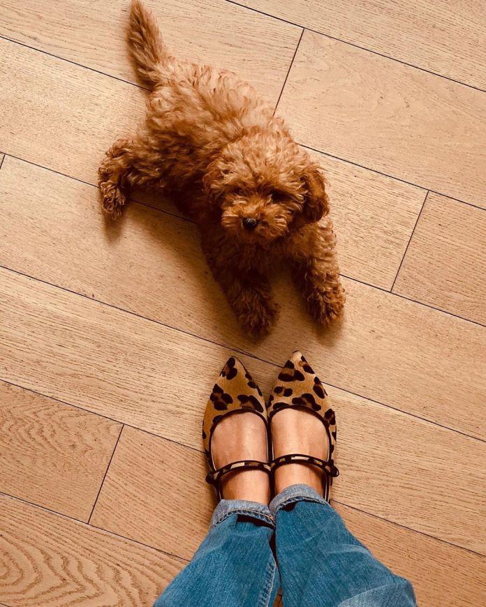 Cliomakeup-animali-delle-star-13-brownie-cane-alessia-marcuzzi