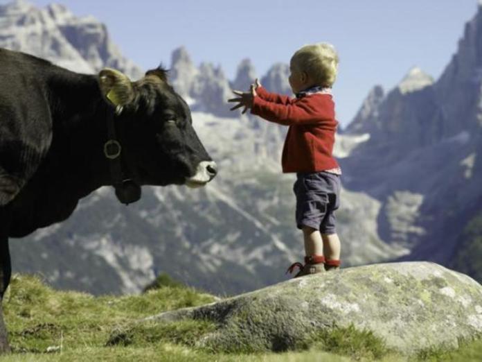 cosa fare in montagna: gita in fattoria