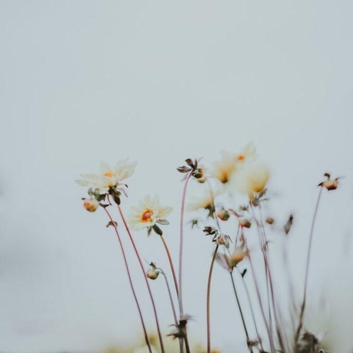 cliomakeup-clean-beauty-13-botanico