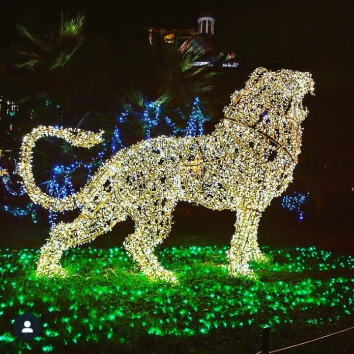 Luminarie natalizie: le luci d'artista di Torino e Salerno incantano grandi e piccini