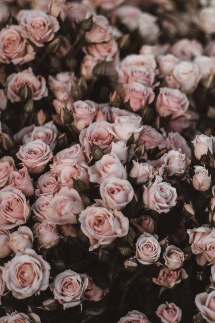 cliomakeup-labbra-secche-15-rose