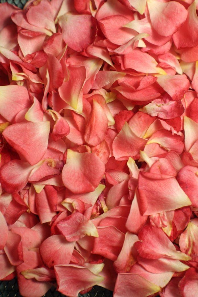 cliomakeup-labbra-secche-16-petali