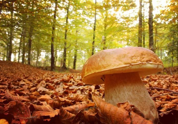 cliomakeup-viaggi-italia-autunno-7-liguria