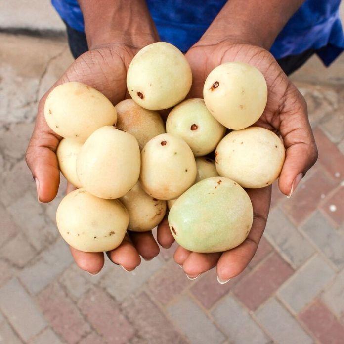 cliomakeup-olio-di-marula-frutto