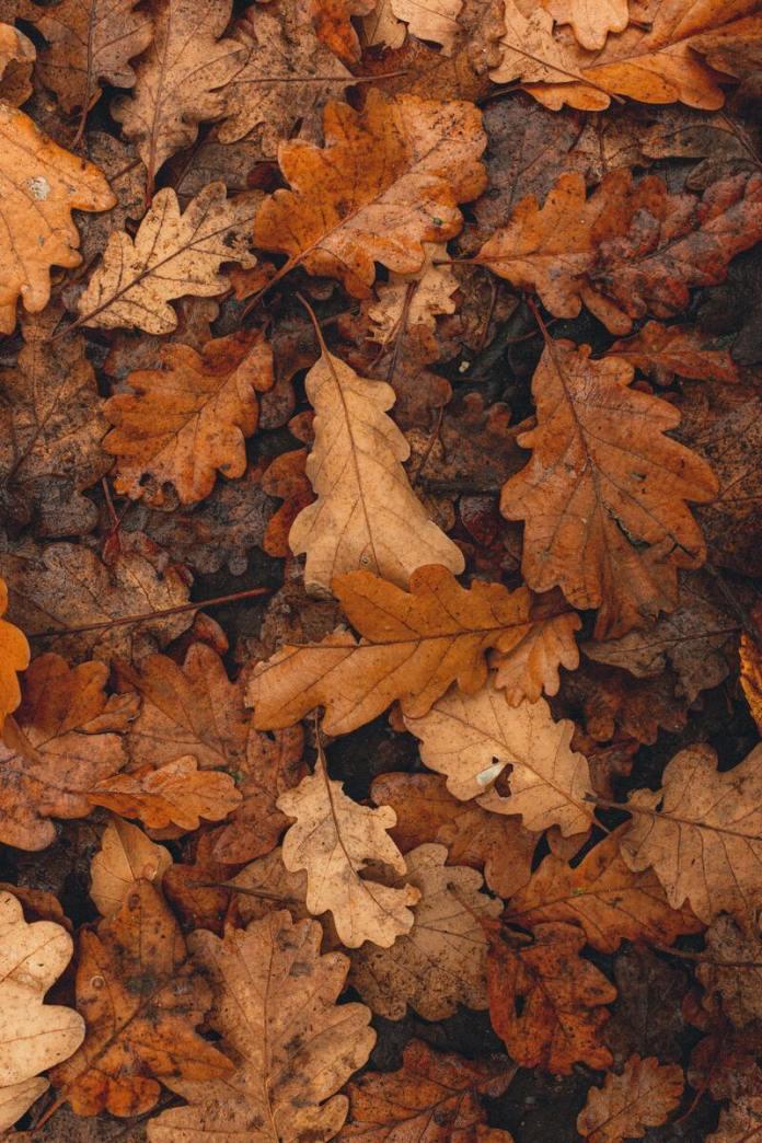 cliomakeup-passeggiate-castagne-bambini-autunno