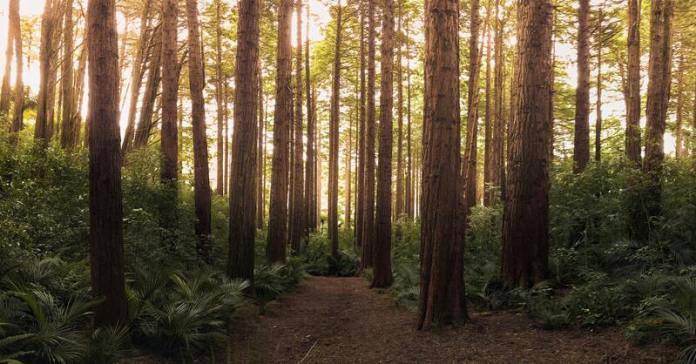 cliomakeup-passeggiate-castagne-bambini-boschi