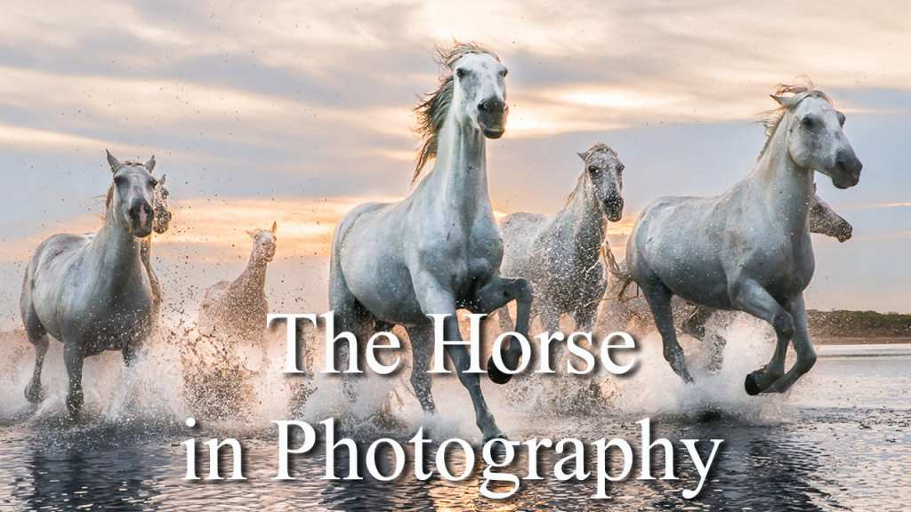 The Horse in Photography