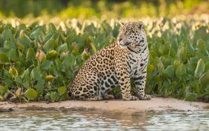 As maravilhas do Pantanal