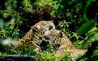 Amazônia: A maior biodiversidade do mundo!