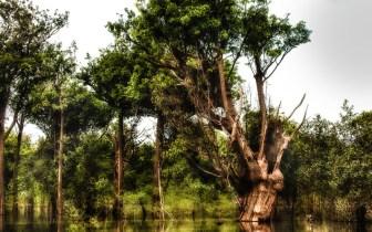 As belezas do Parque Nacional de Anavilhanas
