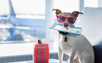 Férias com os pets: como viajar em segurança