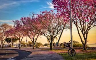 Dicas incríveis para passear em Porto Alegre