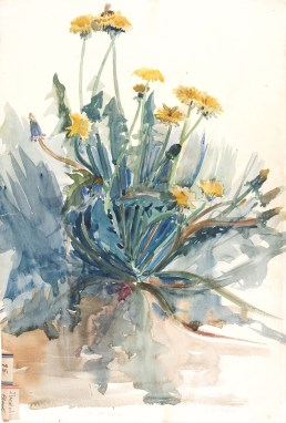 Dandelion plant 95 by Alice Gouvy. Watercolor on paper; 54 x 36 cm. Bib ID 89006.