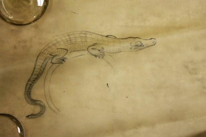 Sketch of a lizard