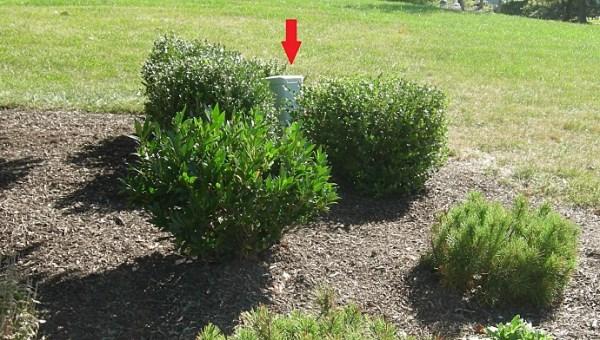choosing decorative plants hide