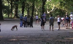 1024px-Dog_walkers_Central_Park_-8403813880-.jpg