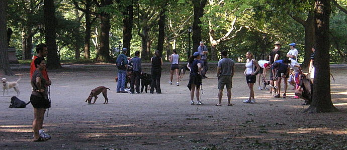 Where to Find the Best Dog Parks in NYC | New York City | Coldwell Banker Blue Matter