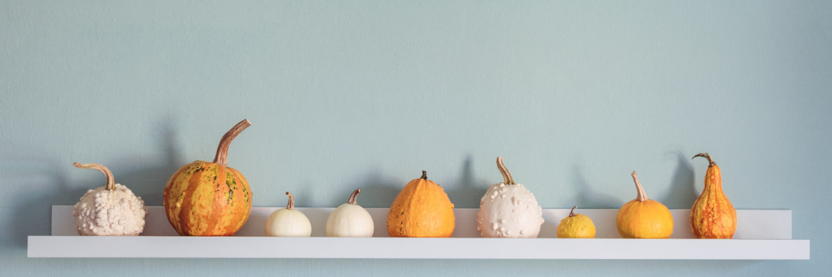 Various pumpkins on a white shelf on blue wall