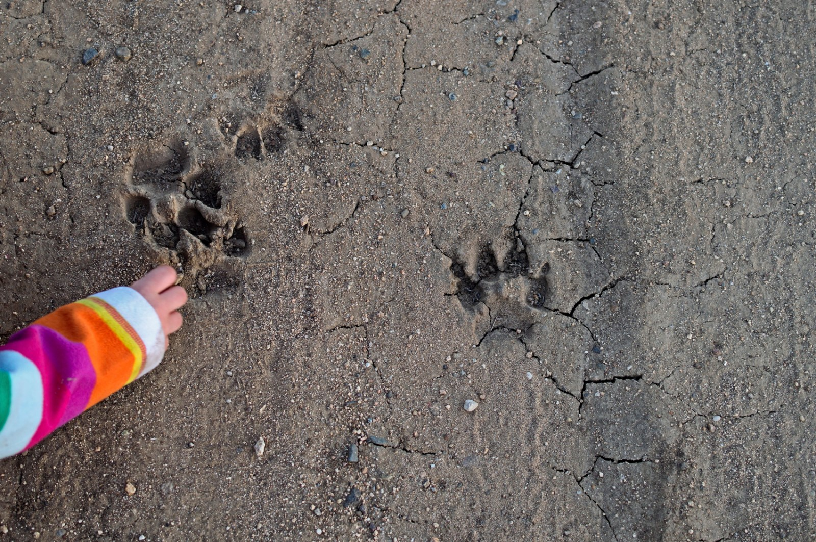 Tracking Animals Near Camp Columbia Blog