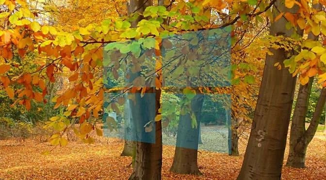 De Windows herfst-upgrade is er (bron afbeelding: https://pixabay.com/nl/park-herfst-tuin-bank-blad-boom-66001/)