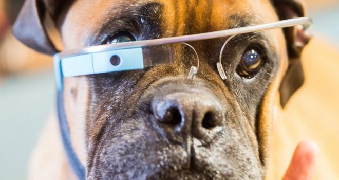 Qué puede hacer la tecnología para cuidar a tus mascotas?