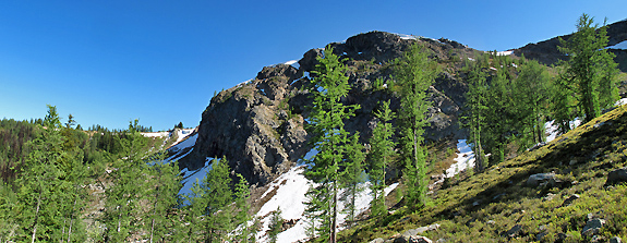 Rocky north-facing slopes are the habitat of choice for the subalpine larch.